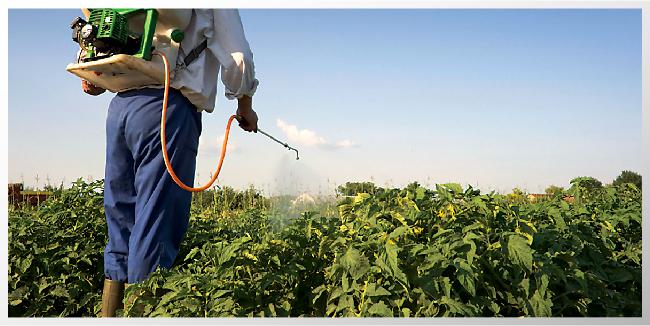 Noticias-Canada-Pesticidas_Header